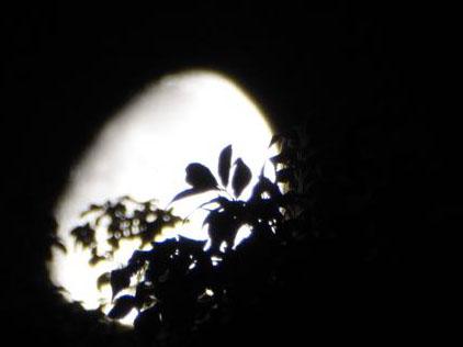Smug Moon