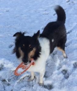 Tess in first snow Jan16