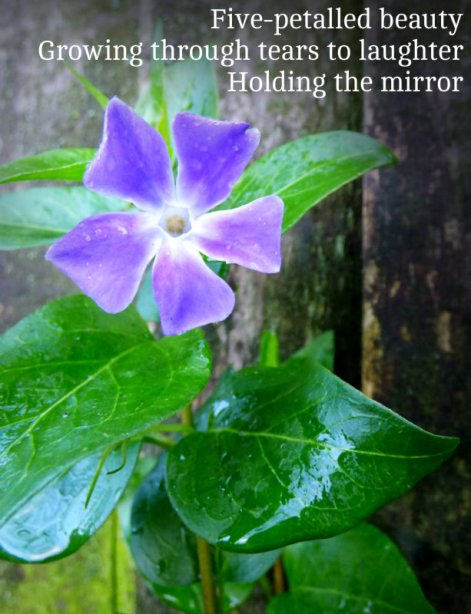 Five-petalled beauty Growing through tears to laughter Holding the mirror
