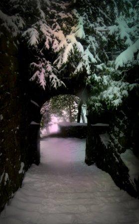 Sue Snow Steps