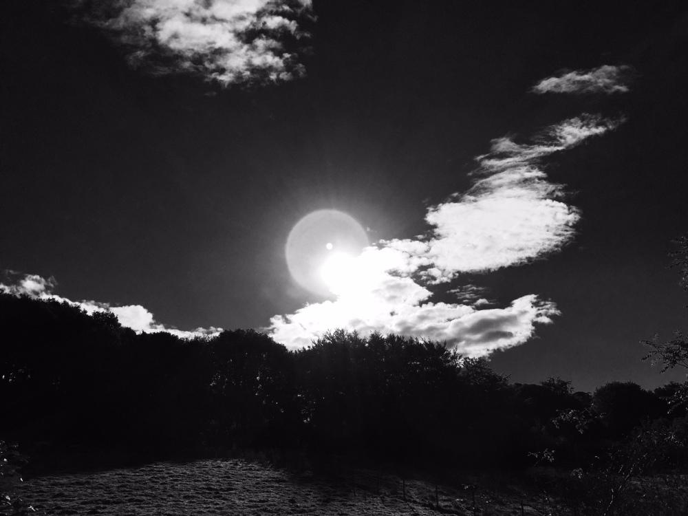 black-and-white-sedgwick