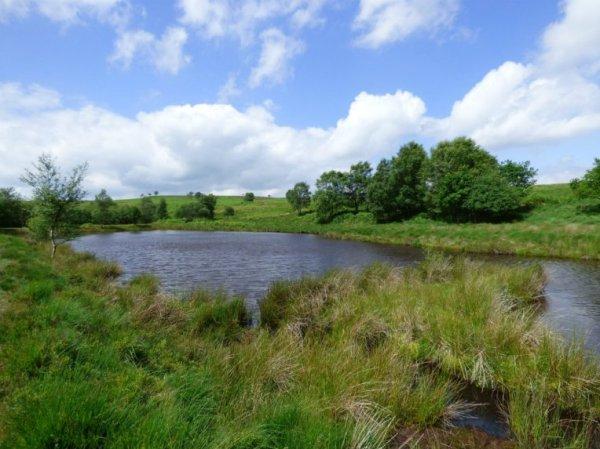 snake-adder-barbrook-merin-stone-beeley-derbyshire-ani-050