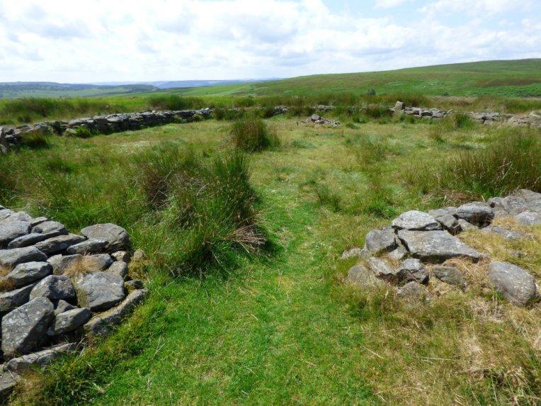 snake-adder-barbrook-merin-stone-beeley-derbyshire-ani-115