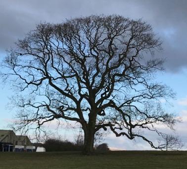 Borderlands Tree reduced