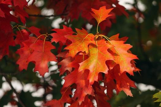 fall-foliage-3705550_960_720.jpg