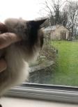 Misti window sm2