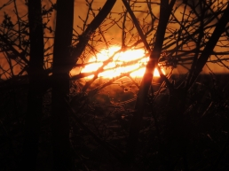 hoovid-sunset-1